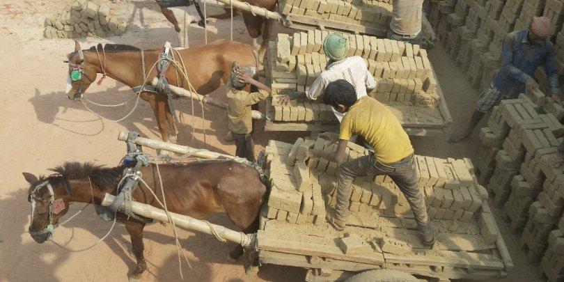 Horses working in Bhadiya Brick Kiln in Nepal