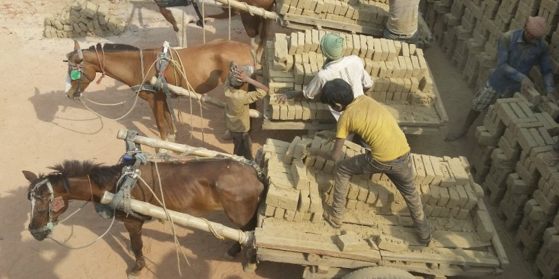 Horses working in Bhadiya Brick Kiln in Nepal