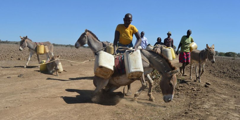 Woman helping donkey up Kenya