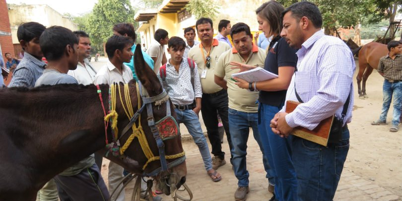 Brooke vet takes part in the global animal health exchange in India