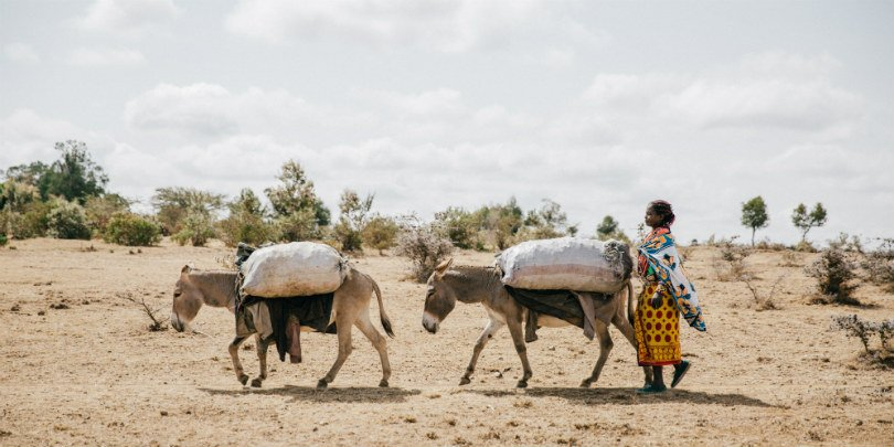 Donkeys carrying produce during Kenya drought