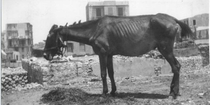 Emaciated horse in Cairo