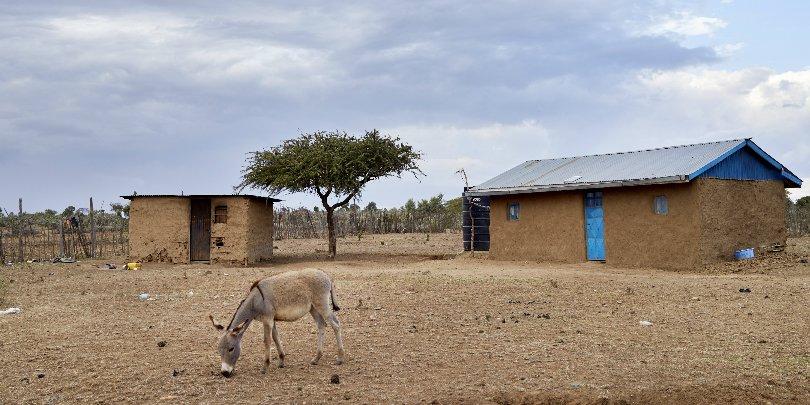 Donkey in Kenya