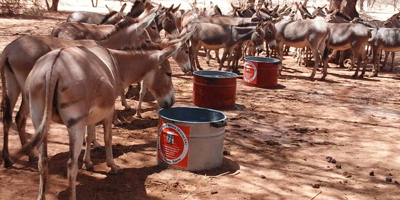 Donkeys after water has been delivered in Turkana