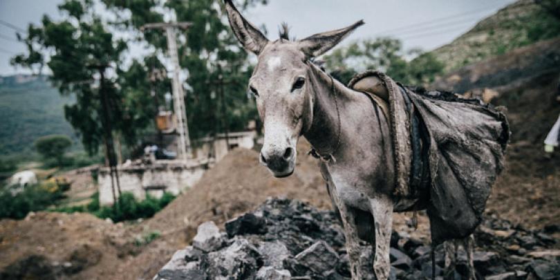 Coal mine donkey in Pakistan