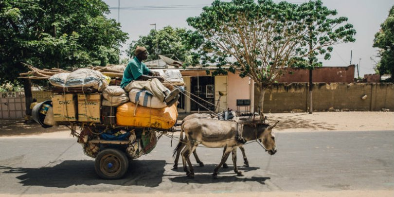 Donkeys pull heavy load in Senegal