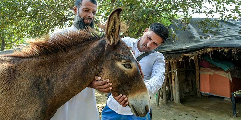 Animal Health Practitioner Gulfam Ali