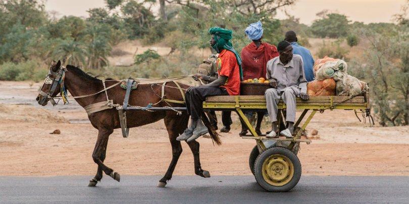 Horse pulls heavy cart in Senegal