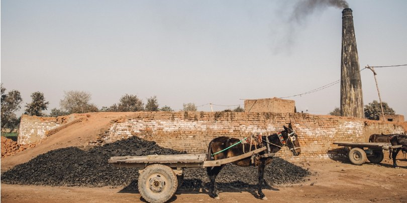 mule waits to be loaded with bricks - Pakistan