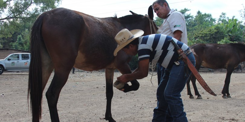 Equine owners and Lester Lemus, Project Assistant and Handler at ESAP