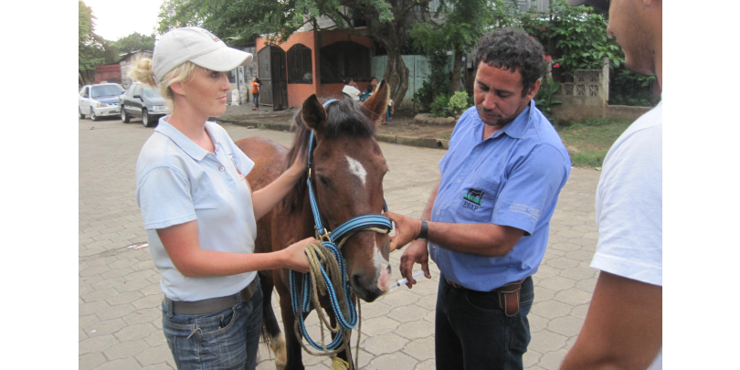 Ashleigh scoping the welfare needs of a horse in Nicaragua
