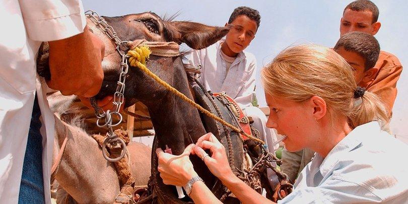 Emma Goodman-Milne treats working equines