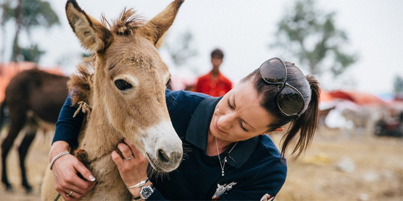 Charlotte with healthy mule foal