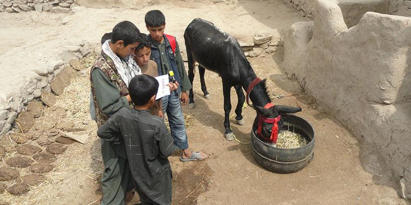 Children receiving training on animal welfare and compassion, Afghanistan