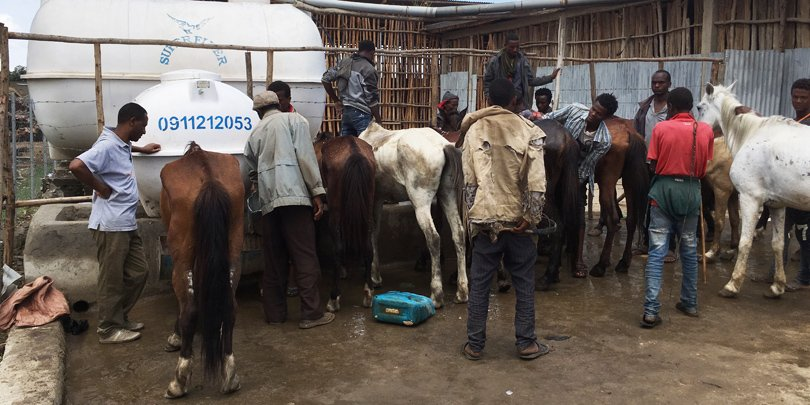 Gharry horses drinking outside a shelter, Halaba, Ethiopia