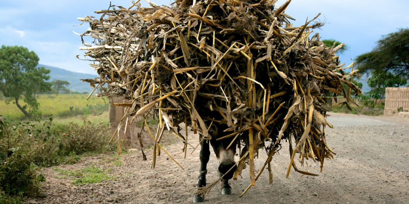 A donkey carrying goods