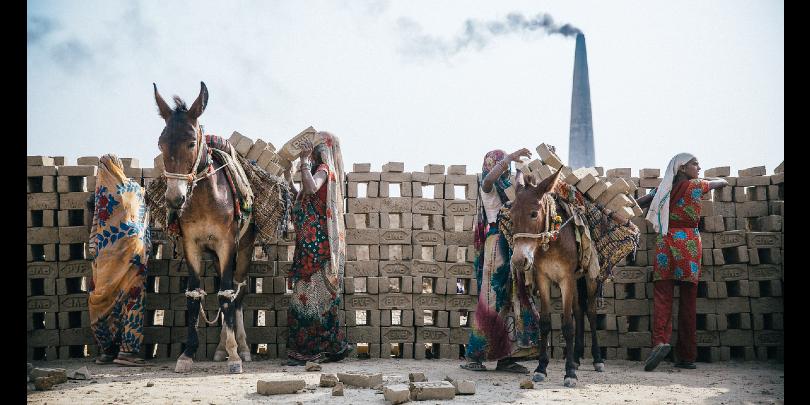 Mules prepare to pull carts of bricks at a kiln in India