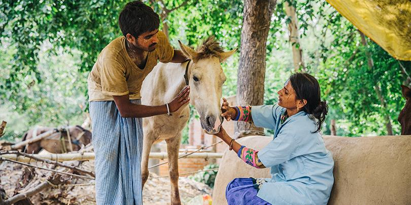 A Brooke-trained community based animal health worker treats a horse in India