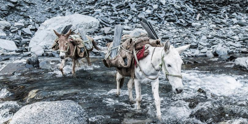Equines carrying slate across a river. Credit/Copyright - Richard Dunwoody MBE