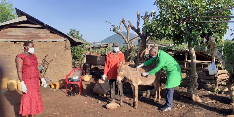 Dr James Kithuka with a donkey in Kenya
