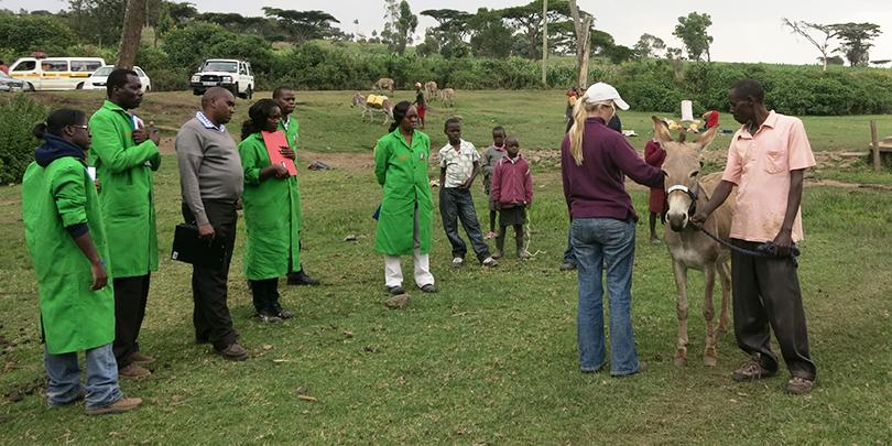 Welfare assessment of a donkey in Kenya