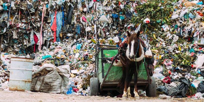 Horse working at the refuse and recycling centre in San Martin, Puebla State, where Brooke's project previously operated