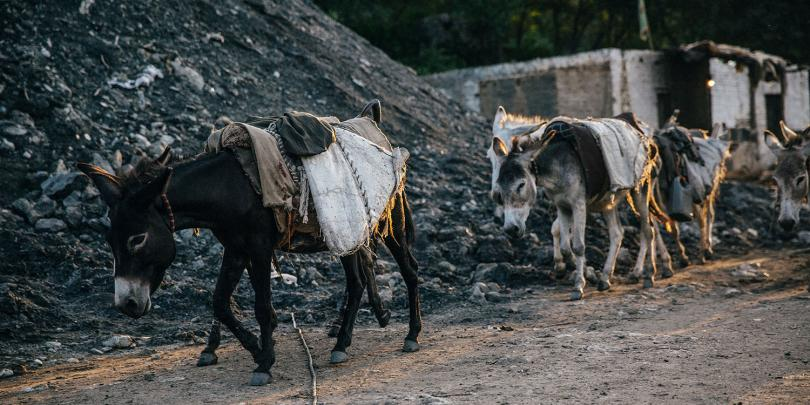 Donkeys working at a Pakistan coal mine