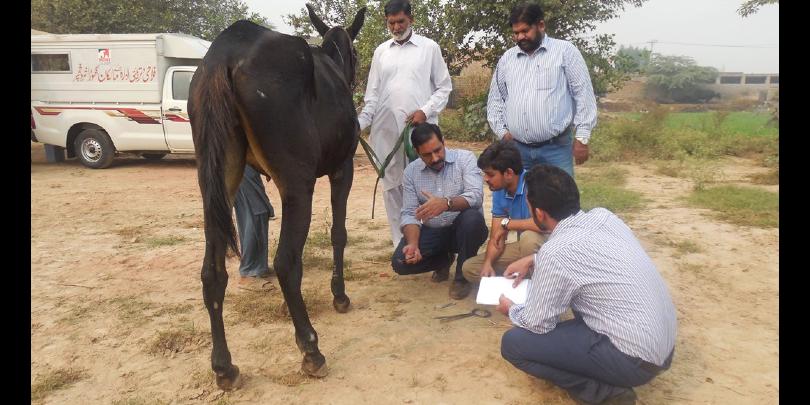 Javed demonstrating the farriery mentoring framework to team members