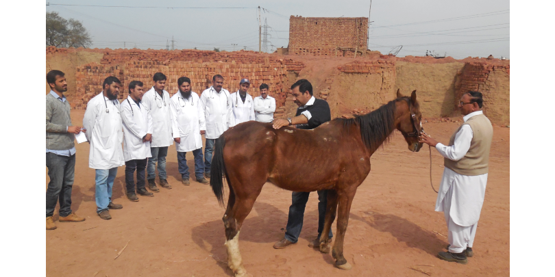 Man teaching Brooke veterinarians on clinical examination of equid