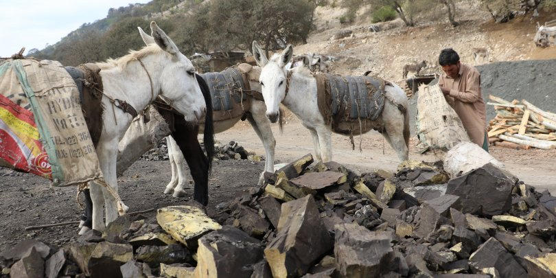 A donkey working in a coal mine, Pakistan