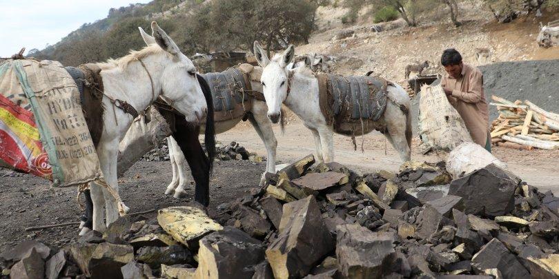A donkey in a coal mine, Pakistan