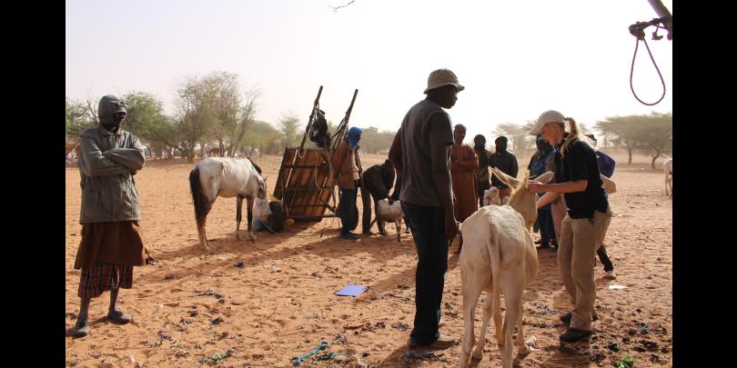 Ashleigh examining an equid in Senegal