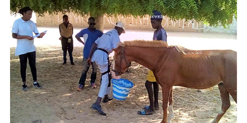 Dr Ndiaye with a horse in Senegal