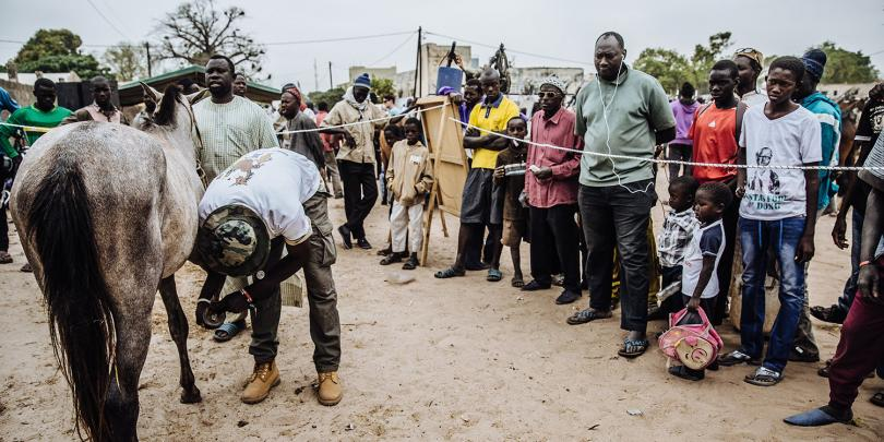 A crowd watching a hoof care demonstration in Senegal