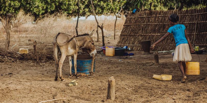 A young girl carrying water to a donkey