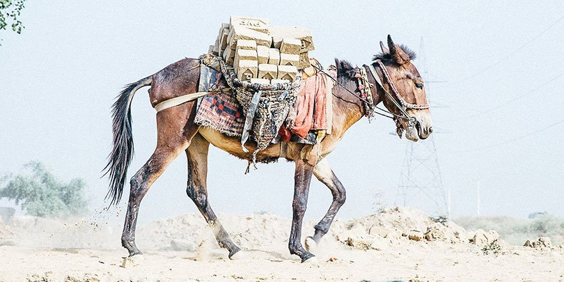 An equine carrying bricks