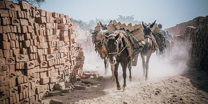 Equines carrying bricks along a dusty path