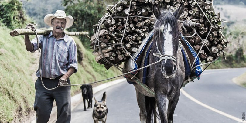 Horse carrying wood in Guatemala