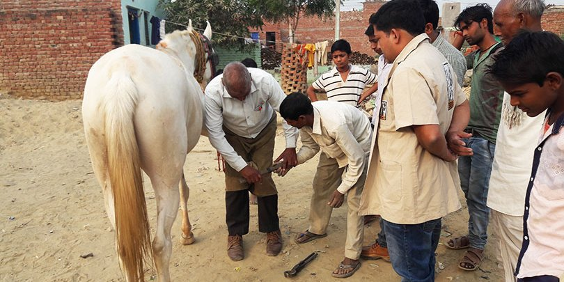 Mentoring farriers in Agra