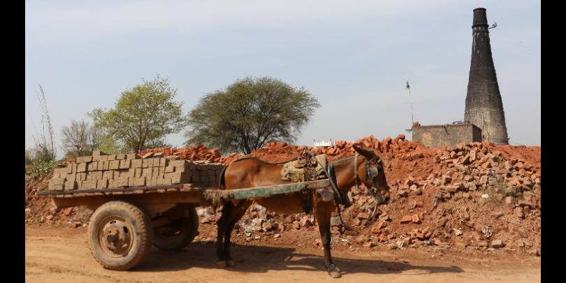 A mule pulls a cart of bricks at a kiln in Pakistan