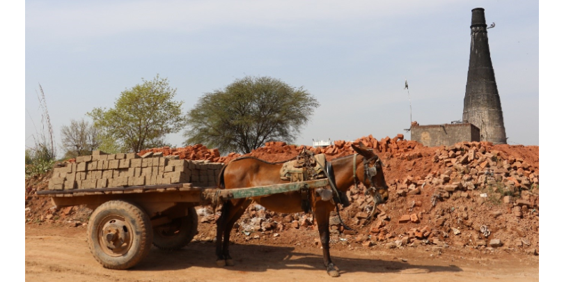 A mule pulls a cart of bricks at a kiln in Pakistan