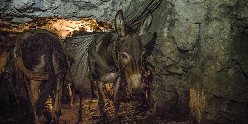 A donkey working in a Pakistan coal mine