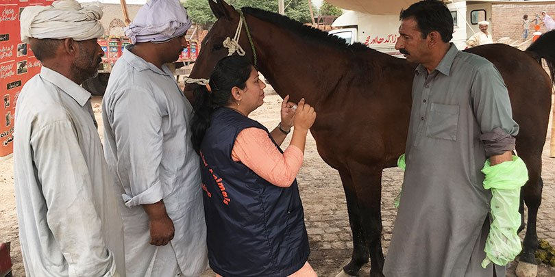 Brooke Pakistan vet Dr Sabra Nazir mentoring a local animal healthcare provider