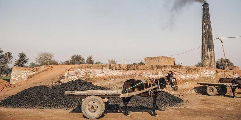 Working donkey at a brick kiln in Pakistan