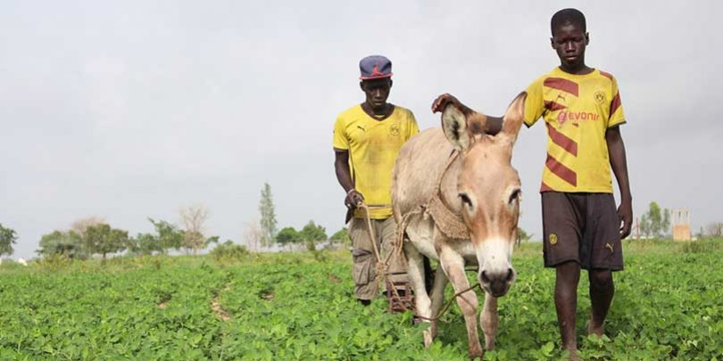 Equine animals are the key to agriculture in Senegal