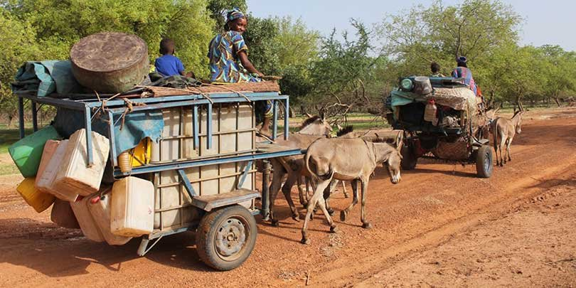Transporting goods using donkeys in Senegal