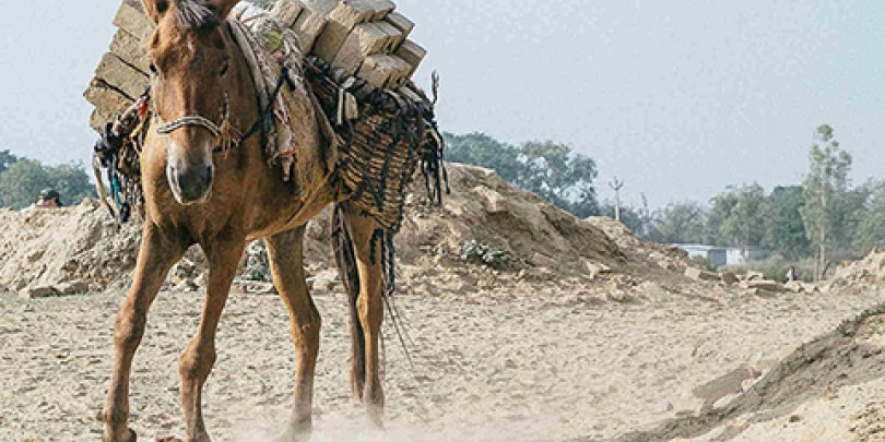 Horse carrying heavy load of bricks