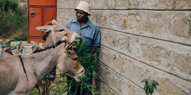 Stephen feeding donkeys