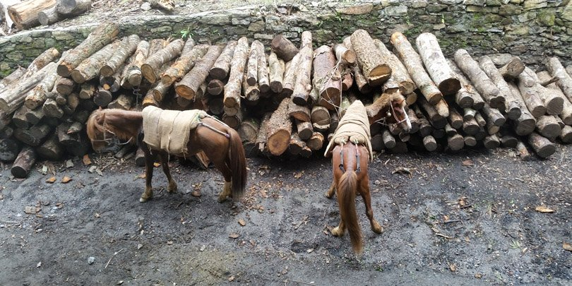 Horses resting after sacks of tea are unloaded at factory