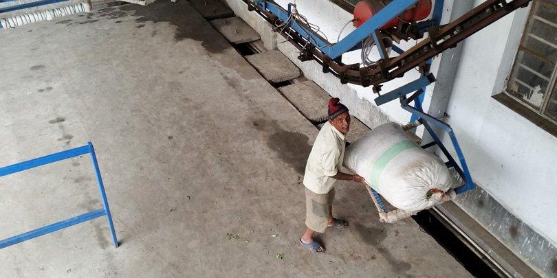 Tea loaded onto 'ski-lift' conveyor, carrying it into factory